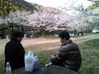 阪南市の鳥取池緑地桜の園(2回目)