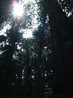 このあたりは木々に深々と覆われていて、けっこう涼しい。